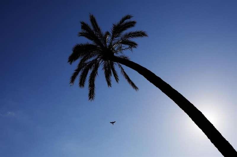 Un ave cruza el cielo despejado de la Comunidad Valenciana . EFE