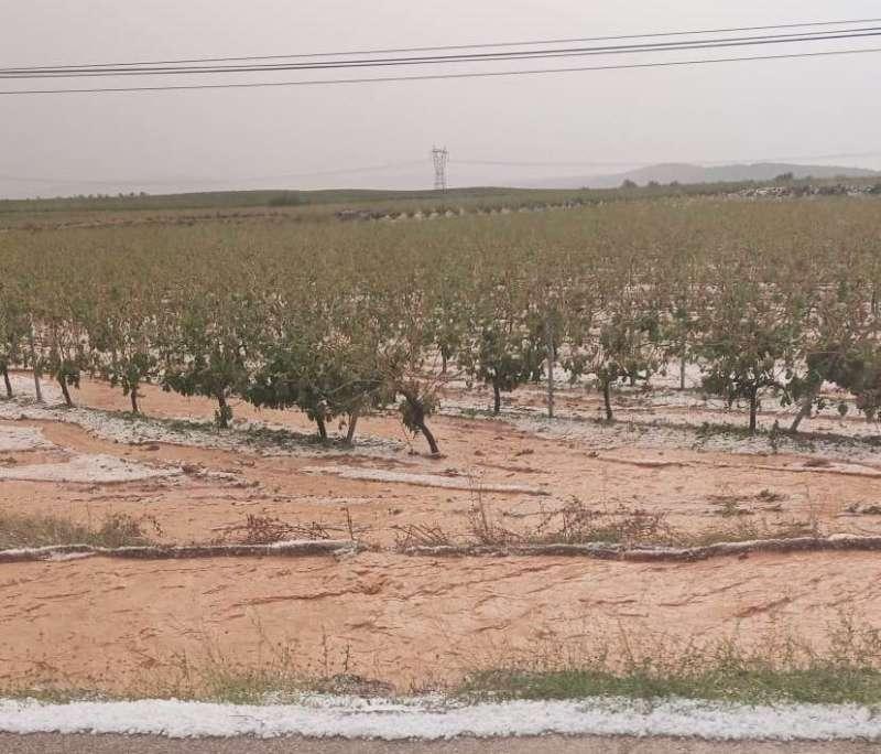 Viñedo afectado por las precipitaciones.