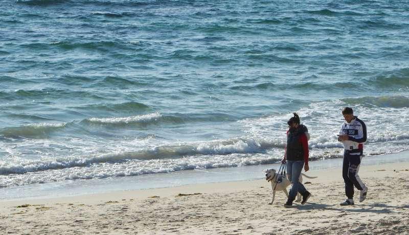 Una pareja pasea a un perro en una playa española. EFE/Salvador Sas/Archivo