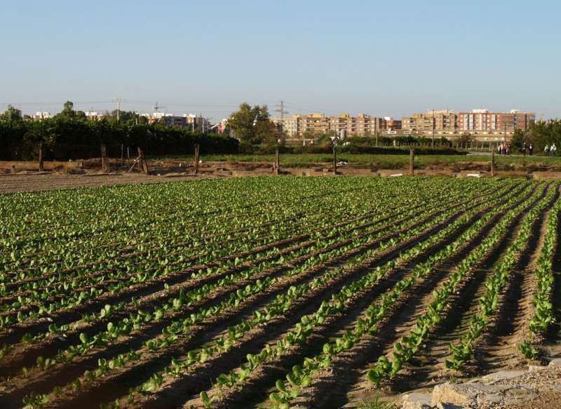 Un campo valenciano. Archivo EPDA.