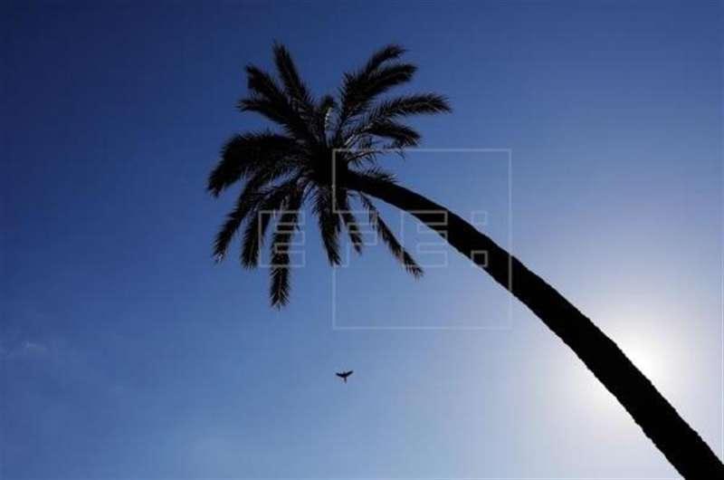 Cielo poco nuboso, viento flojo y temperaturas sin cambios o en ascenso - Un ave cruza el cielo despejado de la Comunidad Valenciana. EFE