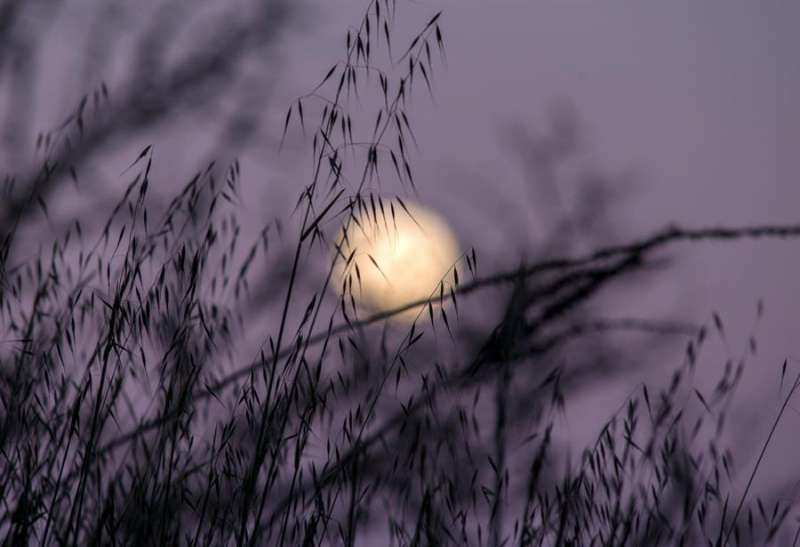 La superluna que anuncia la primavera asoma entre las ramas de una plantas. EFE