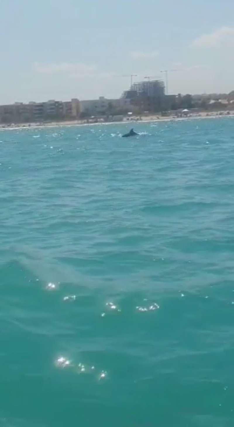 Canet d´en Berenguer recibe la visita de una familia de delfines en la costa. EPDA