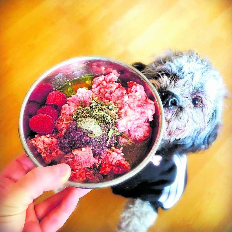 Un perrito disfruta de la comida. / epda