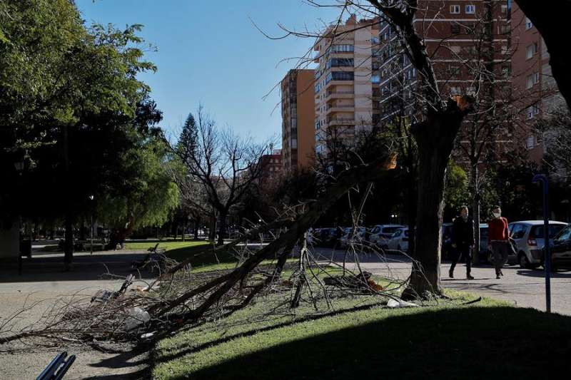 Imagen de archivo de un árbol caído en una jornada de viento EFE/Manuel Bruque/Archivo.