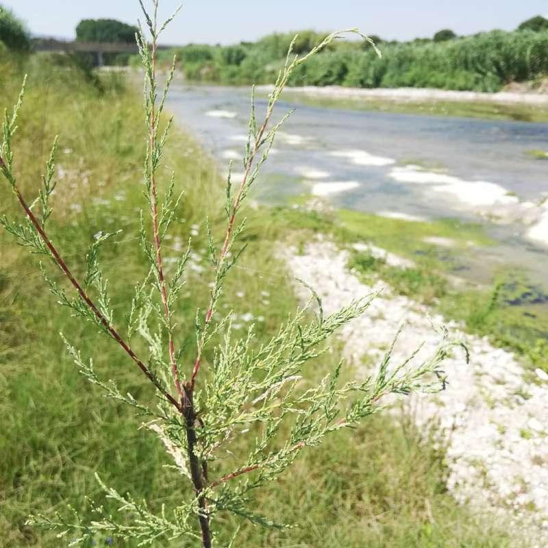 Se elaborarán planes de conservación y mejora de zonas fluviales de uso público. EPDA