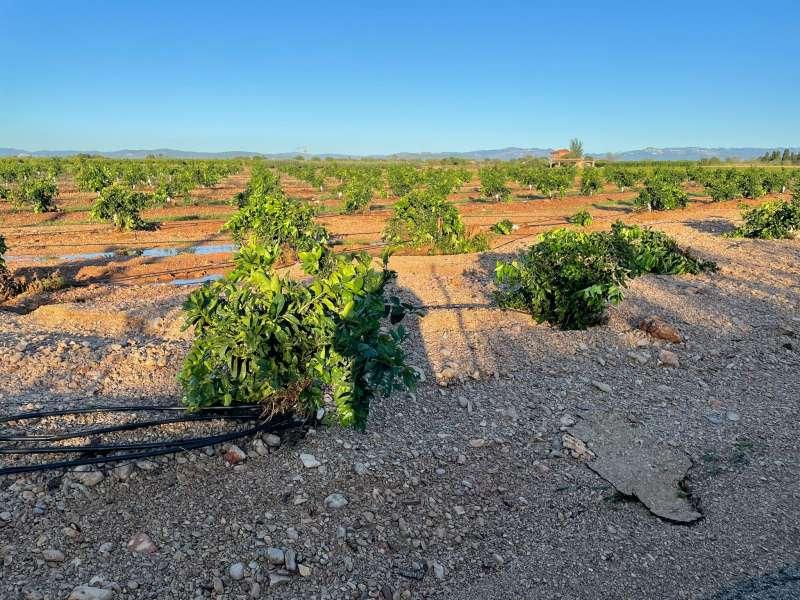 Daños causados por la DANA en la localidad de Vinaròs.